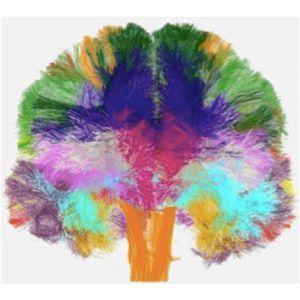 Brain_connectivity_atlas.jpg