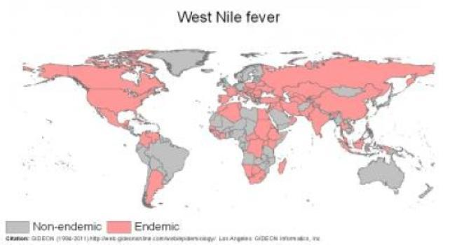 west_nile_fever.jpg