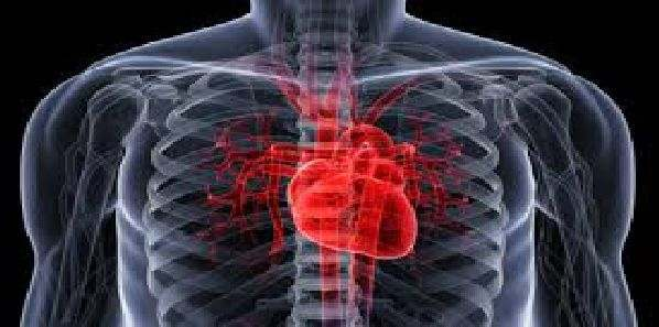 Heart Attack: Stem Cells May Enhance Cardiac Repair