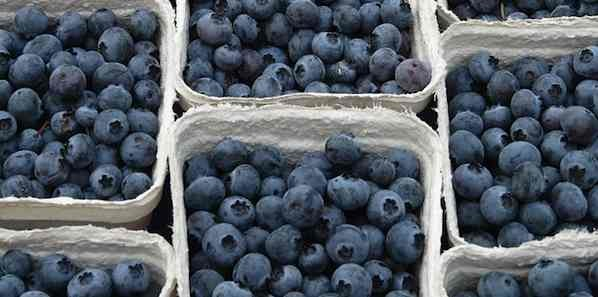Eating Blueberries Linked to Blood Pressure