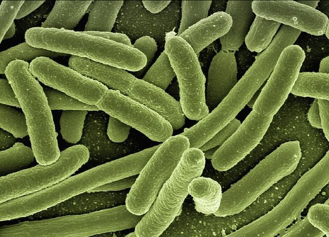 Research Targets Bacteria Behind Hospital-associated Infections