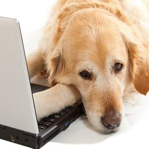 pet health portals
