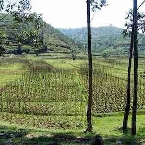 Rwanda landscape, credit Pixabay